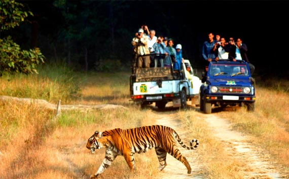 corbett national park tour package india
