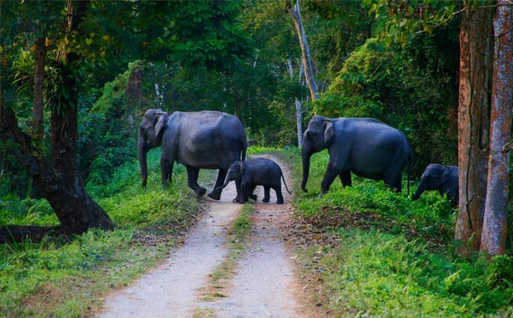 kerala wild life tour india