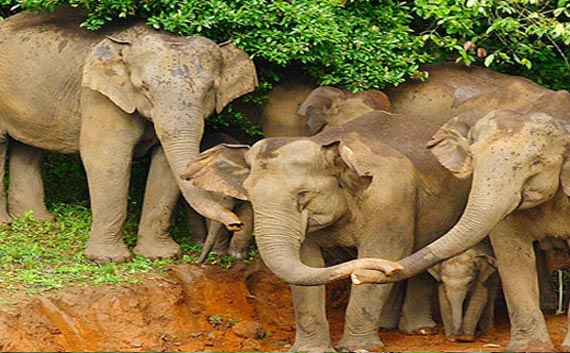 kerala wildlife tour package India