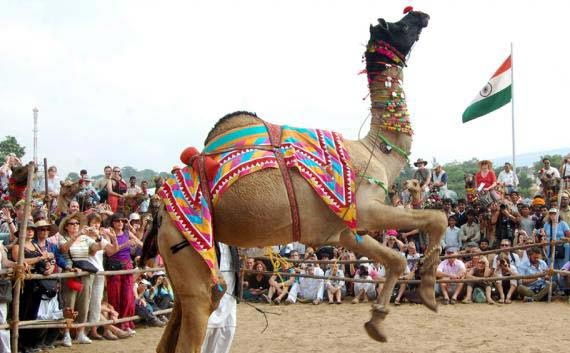 golden triangle tour package with pushkar ajmer