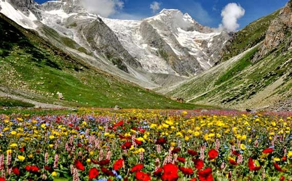valley of flowers uttaranchal tour